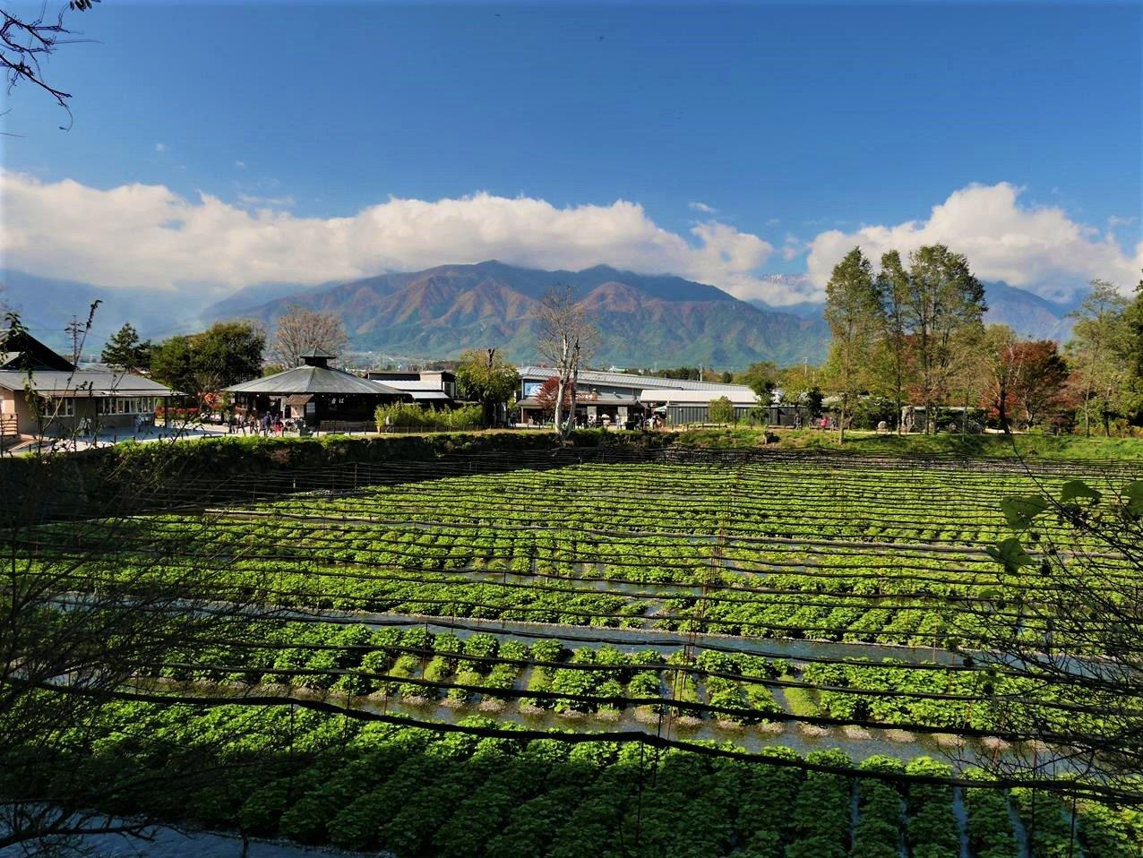 安曇野大王山葵農場