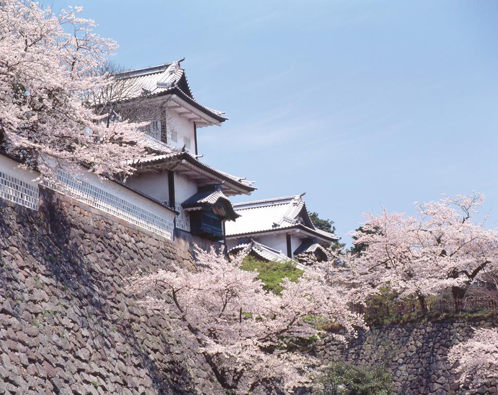 金澤城櫻花