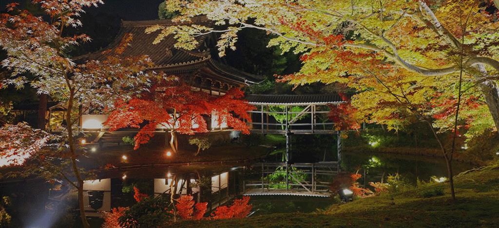 京都高台寺夜楓