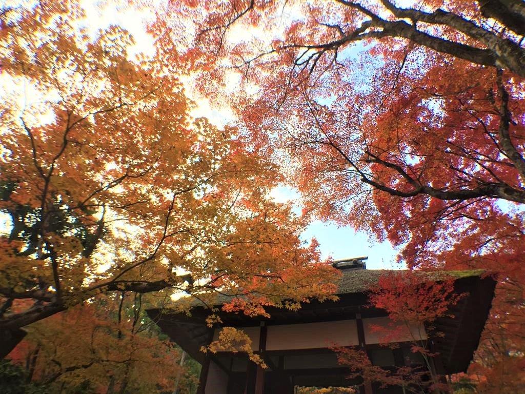 京都楓葉景點常寂光寺