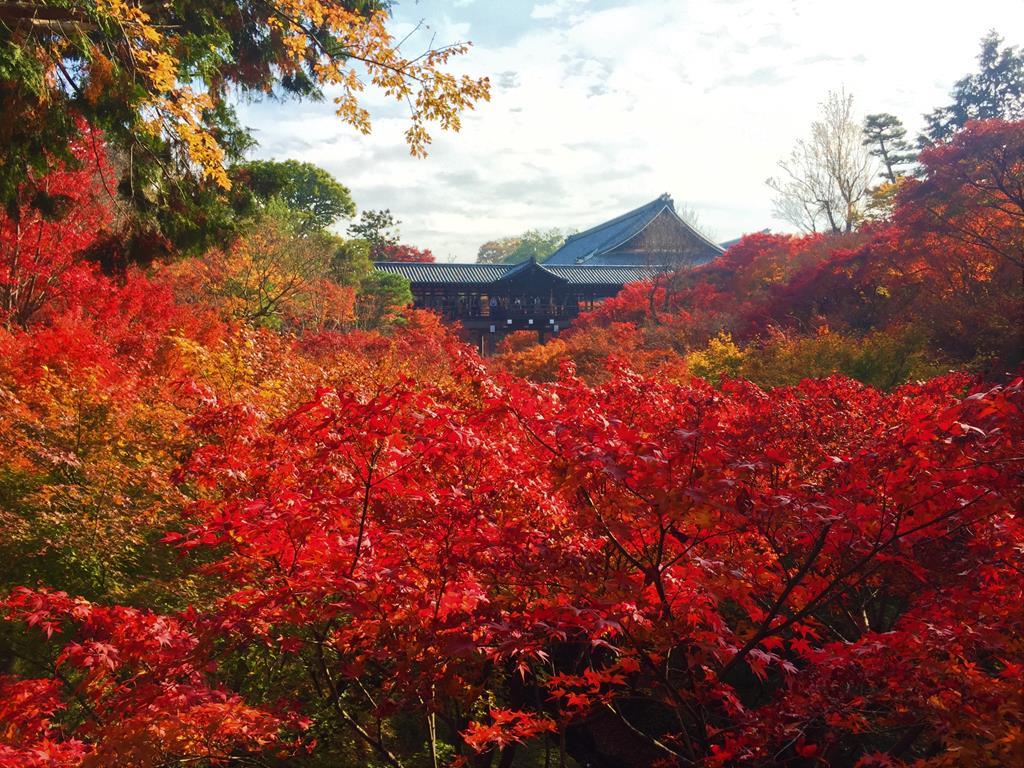 京都楓葉景點東福寺