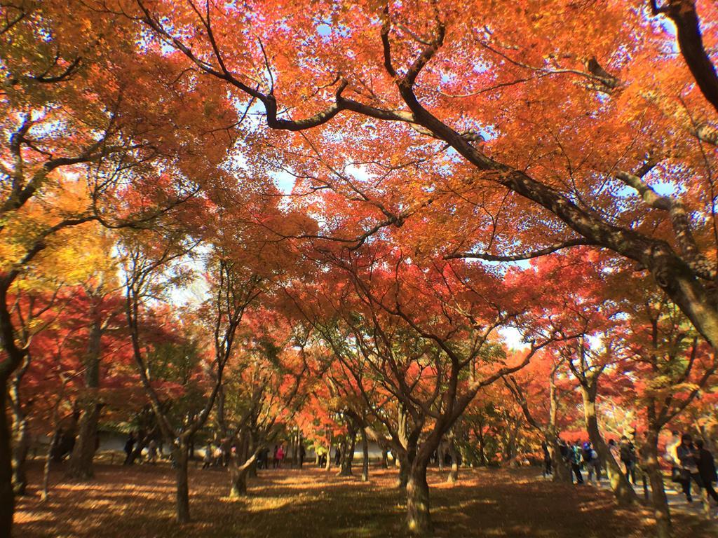 京都東福寺楓葉