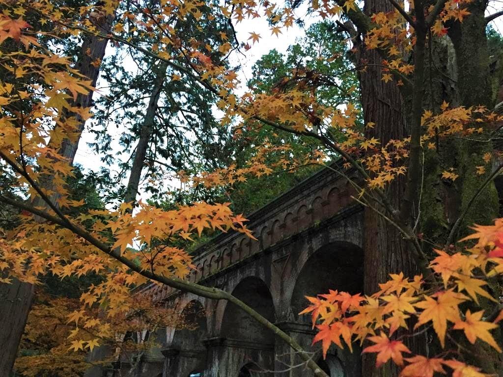 京都南禪寺楓葉