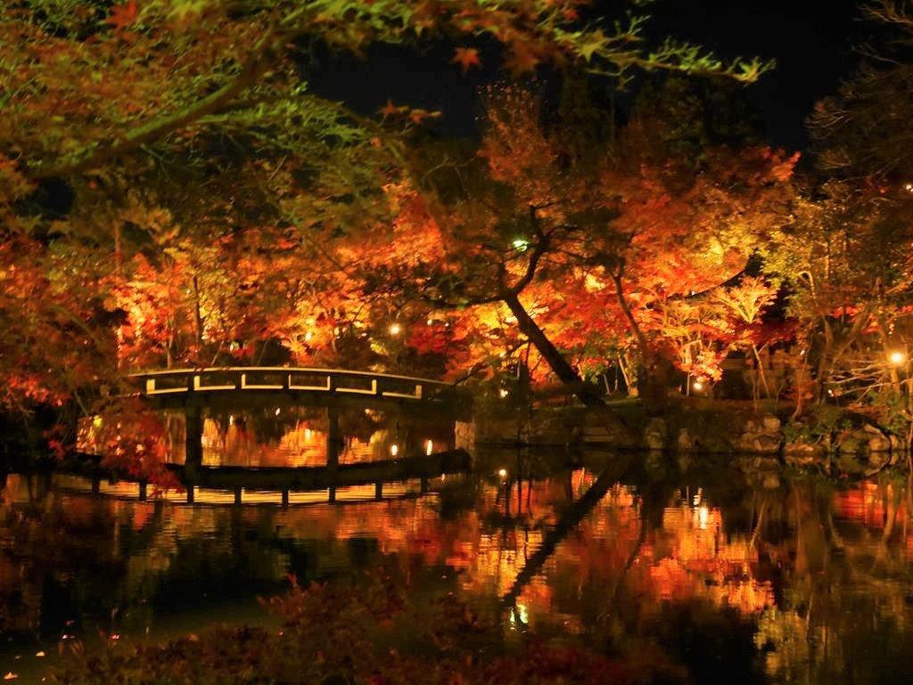 京都夜楓永觀堂