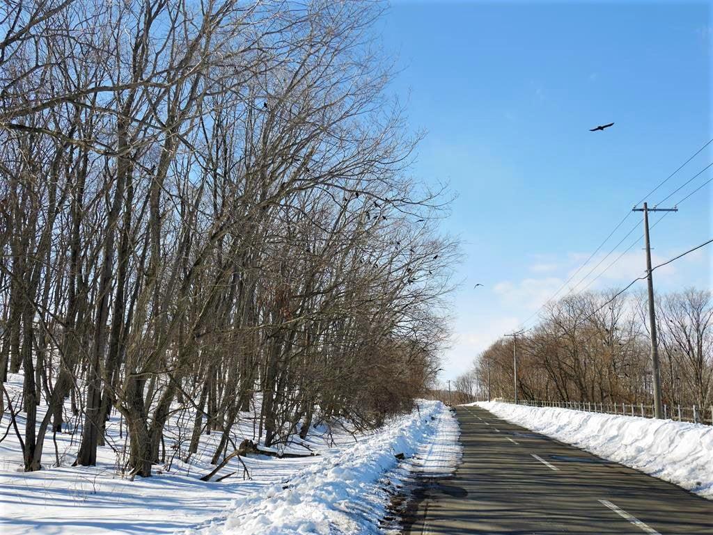 北海道雪地自駕