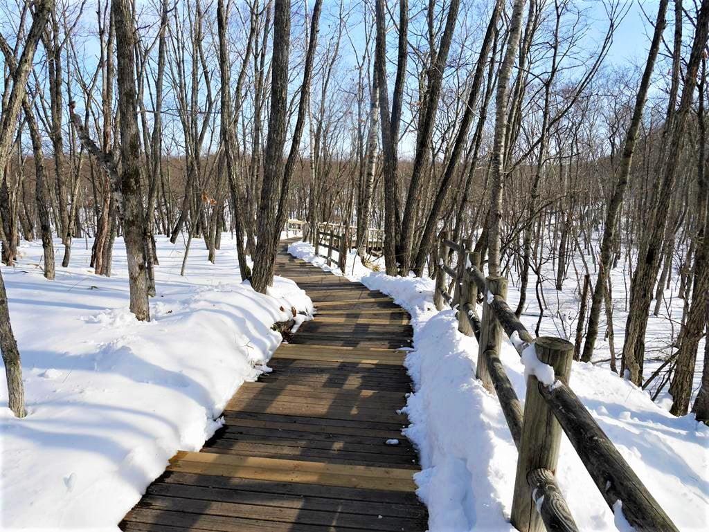 釧路濕原溫根內木道