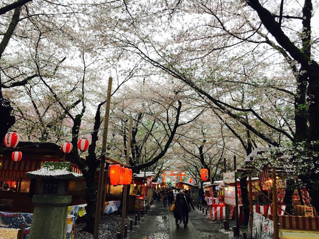 京都平野神社櫻花
