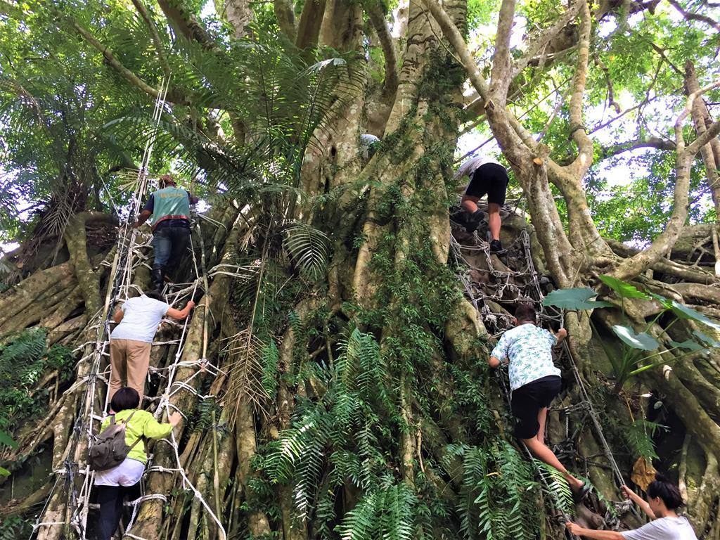 鸞山森林博物館森林探險體驗