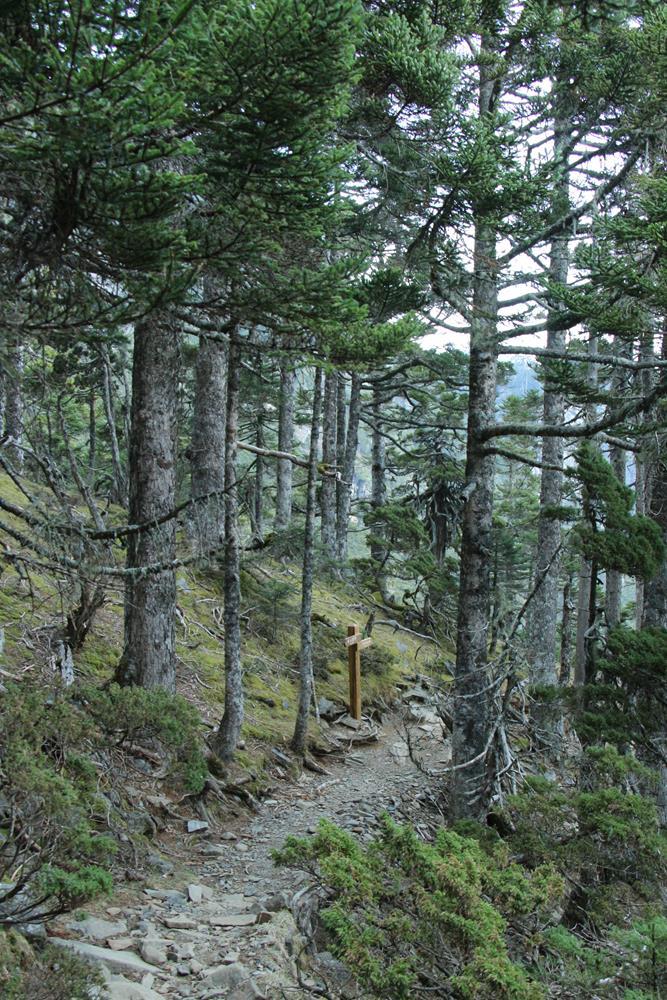 回程後拍的黑森林