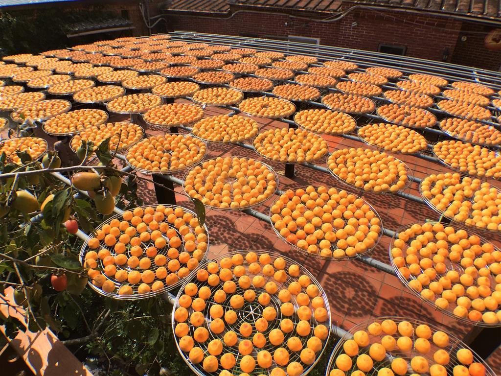 金漢柿餅曬柿高處風景