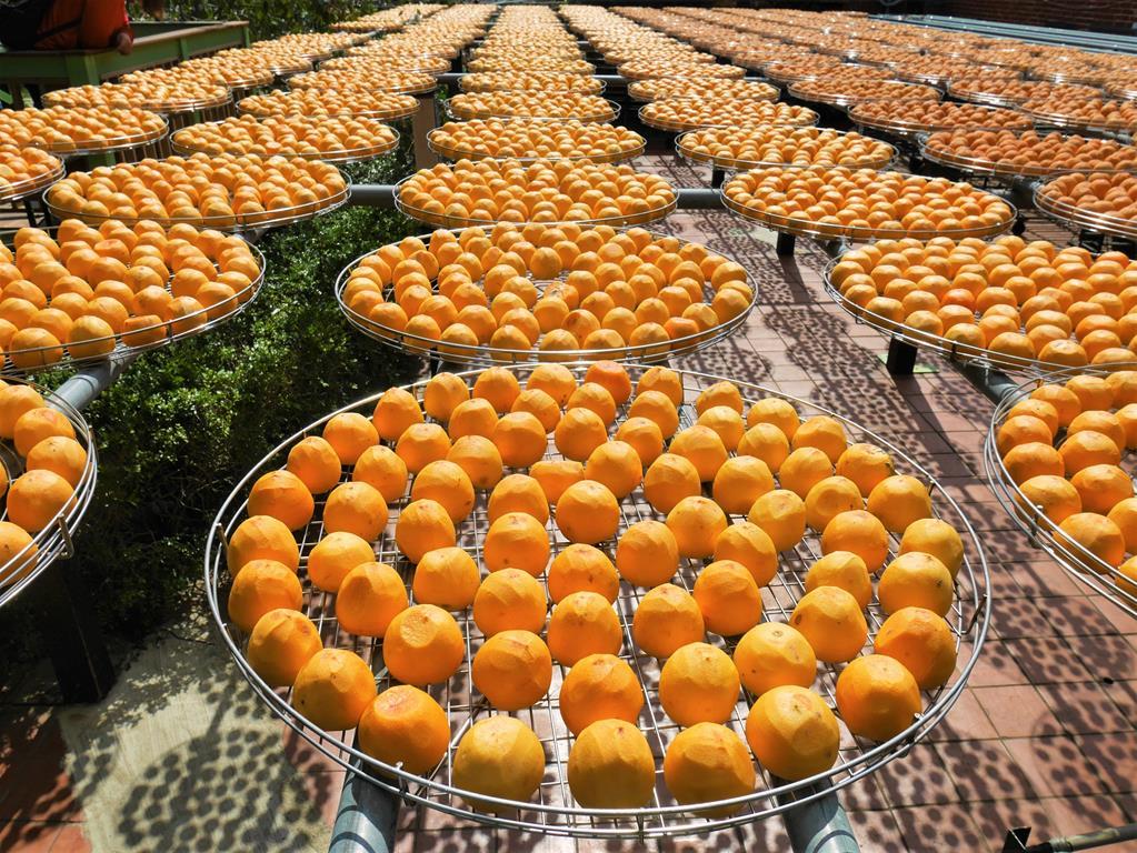 金漢柿餅觀光農園