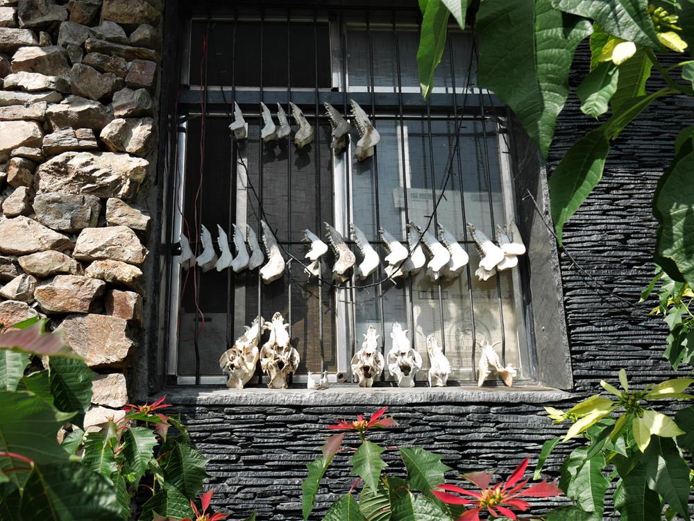 窗邊動物頭骨裝飾
