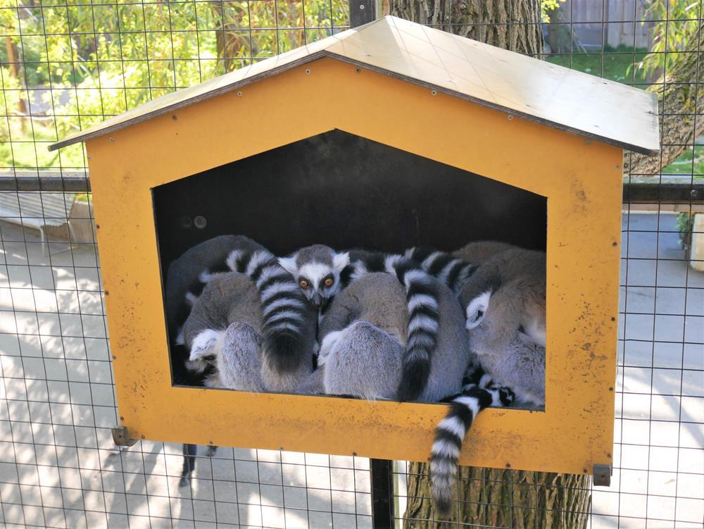 Skansen-Akvariet水族館狐猴