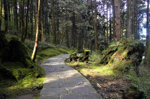 祝山觀日步道