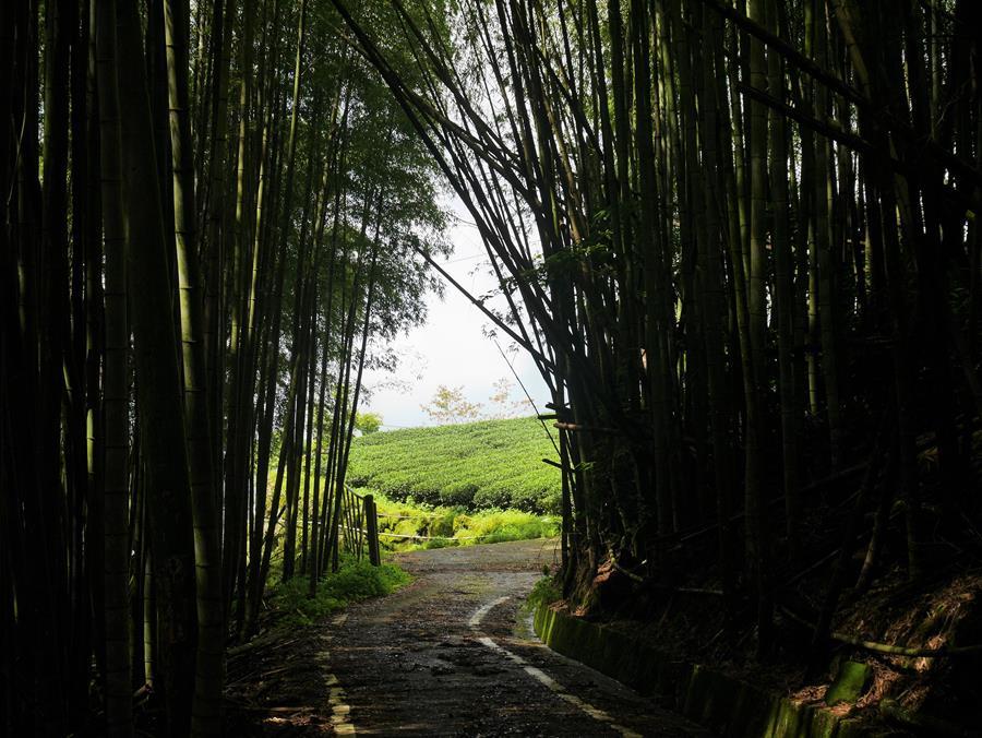 竹林下山步道